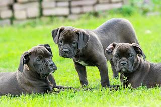 Hundefutter kommt von alsa