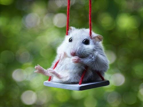 Con chuột buồn bã vô cùng