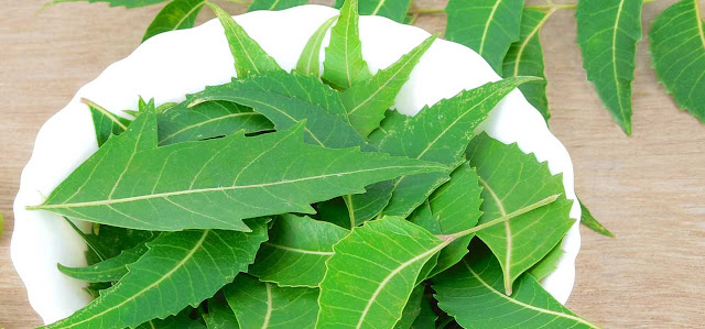 Health Benefits of Neem Juice