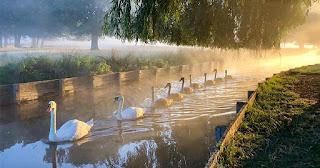 Εκπληκτική φωτογραφία δείχνει οικογένεια κύκνων να κάνει βόλτα σε λίμνη