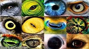 كيف ترى الحيونات الاشياء