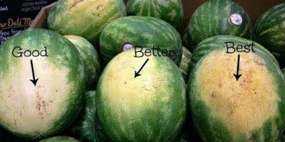 semangka yang bagus