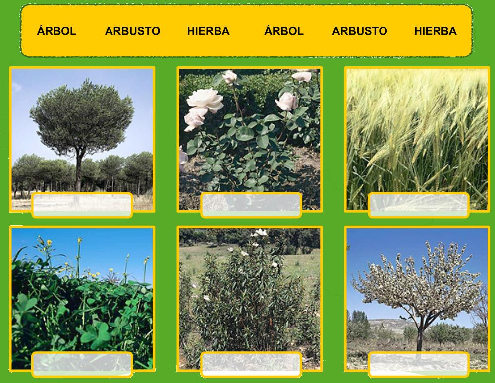 Tercero de primaria montse naturales - Arboles y arbustos ...