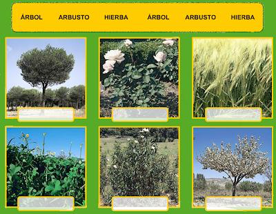 http://www.primerodecarlos.com/TERCERO_PRIMARIA/noviembre/Unidad4/actividades/cono/clasificacion_plantas/visor.swf