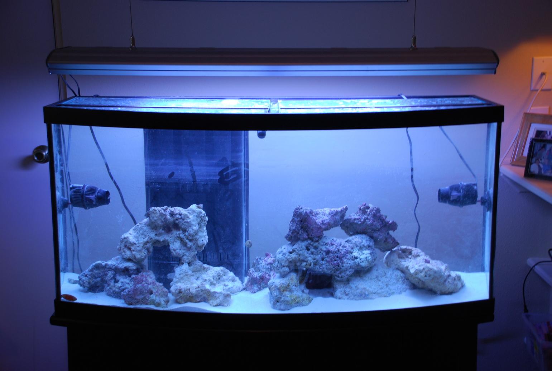 Tiger Oscar Fish Tank Traffic Club