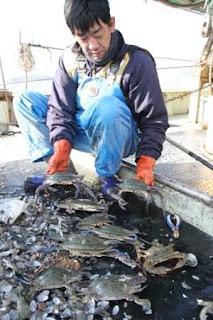 ガザミ底引き網漁