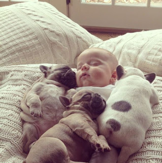 bebe con varios cachorros