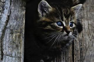 Seekor anak kucing