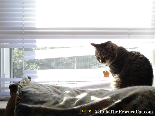 cat in blinds|broken blinds|cat broke blinds
