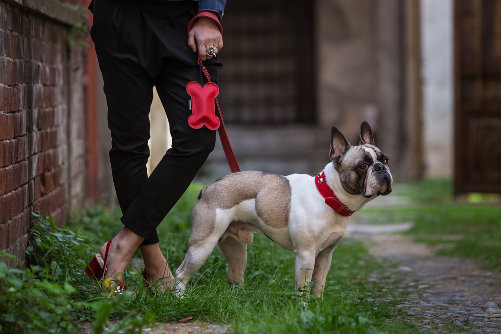 Accessori di lusso per cani 100% made in Italy