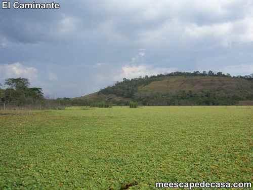 Laguna Ricuricocha (San Martín, Perú) - 5