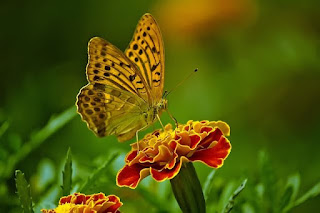 This is a picture of butterfly