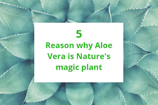 aloevera contain various vitamin, mineral, enzymes and amino acids