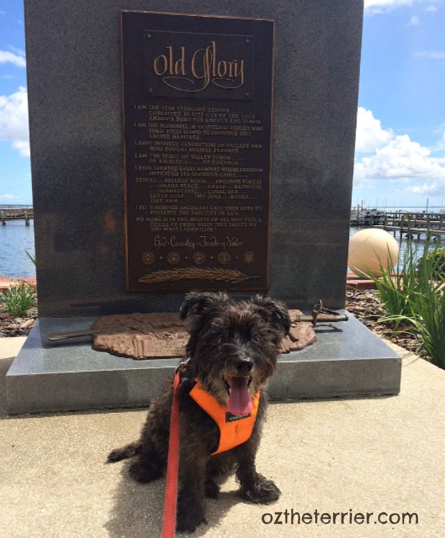 Oz the Terrier in front of Old Glory monument at Space View Park for Veterans Day