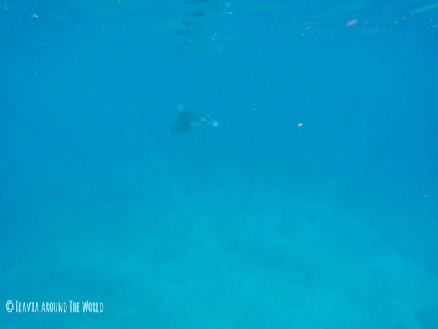 Manta en el Manta Point en Komodo