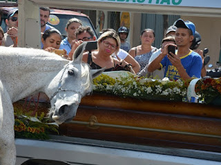 VÍDEO - Cavalo comove família de vaqueiro morto ao 'se despedir' do dono na PB