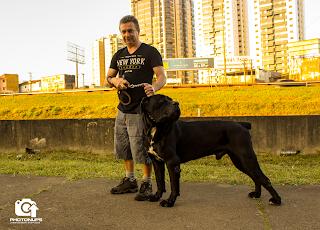 Photonups - Cães - São Paulo