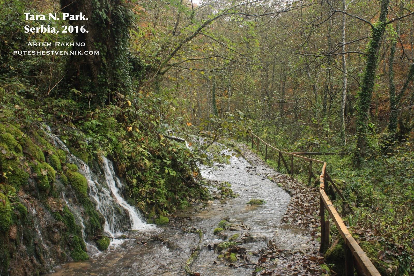 Водопад и ручей в лесу
