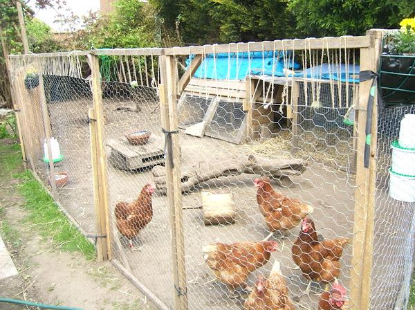 Keeping Wild Birds Out of Chicken Coop | Modern Farming Methods