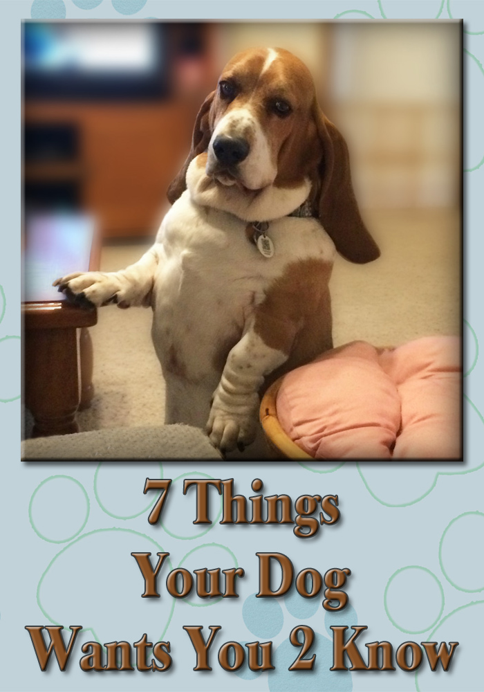 "Bentley Basset meme ""7 things your dog wants you to know"""