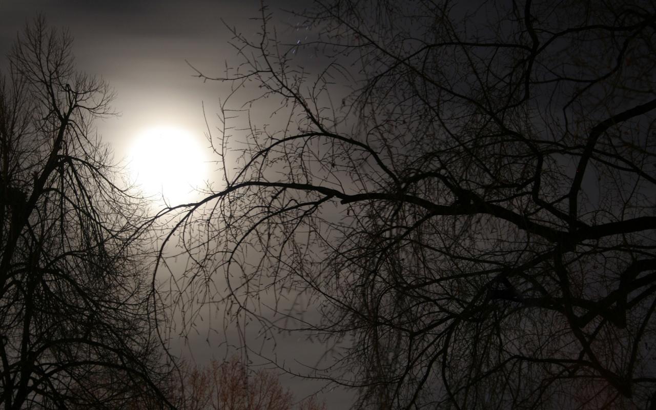 Free Wallpaper: Dark Sun Nature Wallpaper
