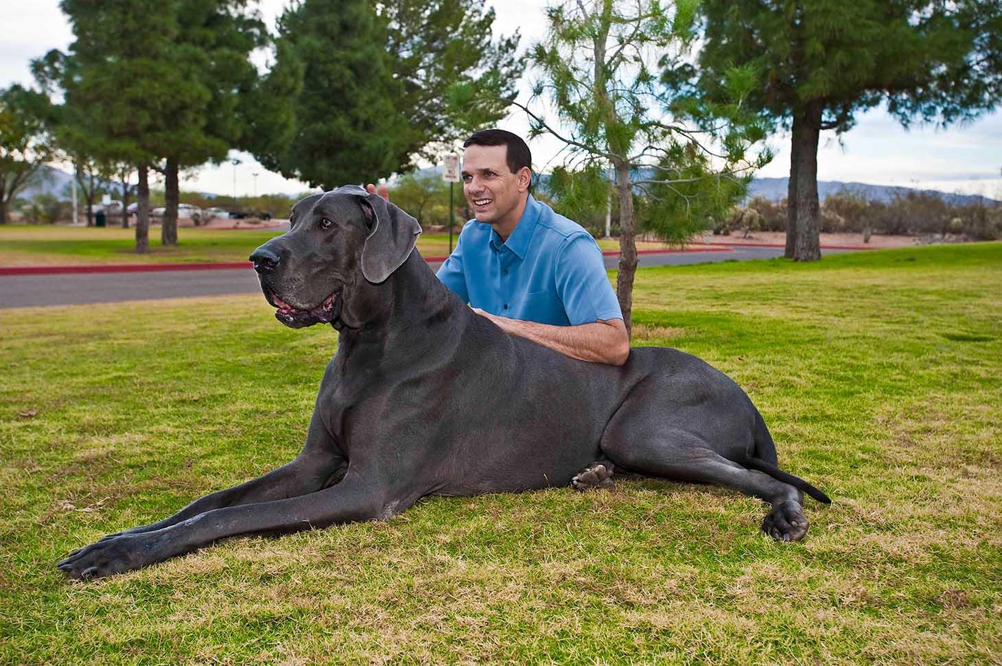 largest dog - photo #7