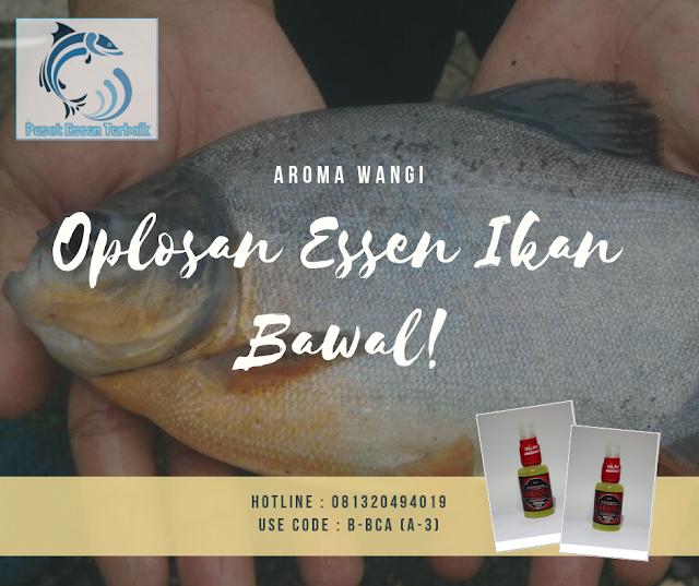 https://pusatessenterbaik.blogspot.com/2018/12/oplosan-essen-ikan-bawal-aroma-wangi-anti-zonk.html