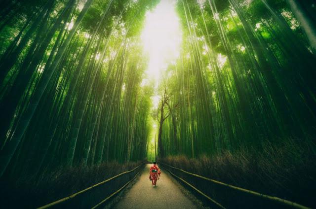 Hutan Bambu, Kyoto, Jepang