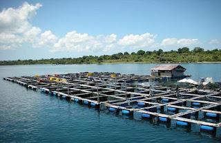 Danau dapat dijadikan tambak ikan