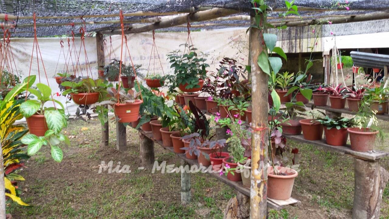 Taman Kecil Di Belakang Rumah Mia Memories Of Mine