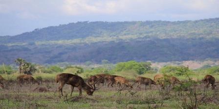 Taman Nasional Baluran taman nasional baluran banyuwangi taman nasional baluran melindungi