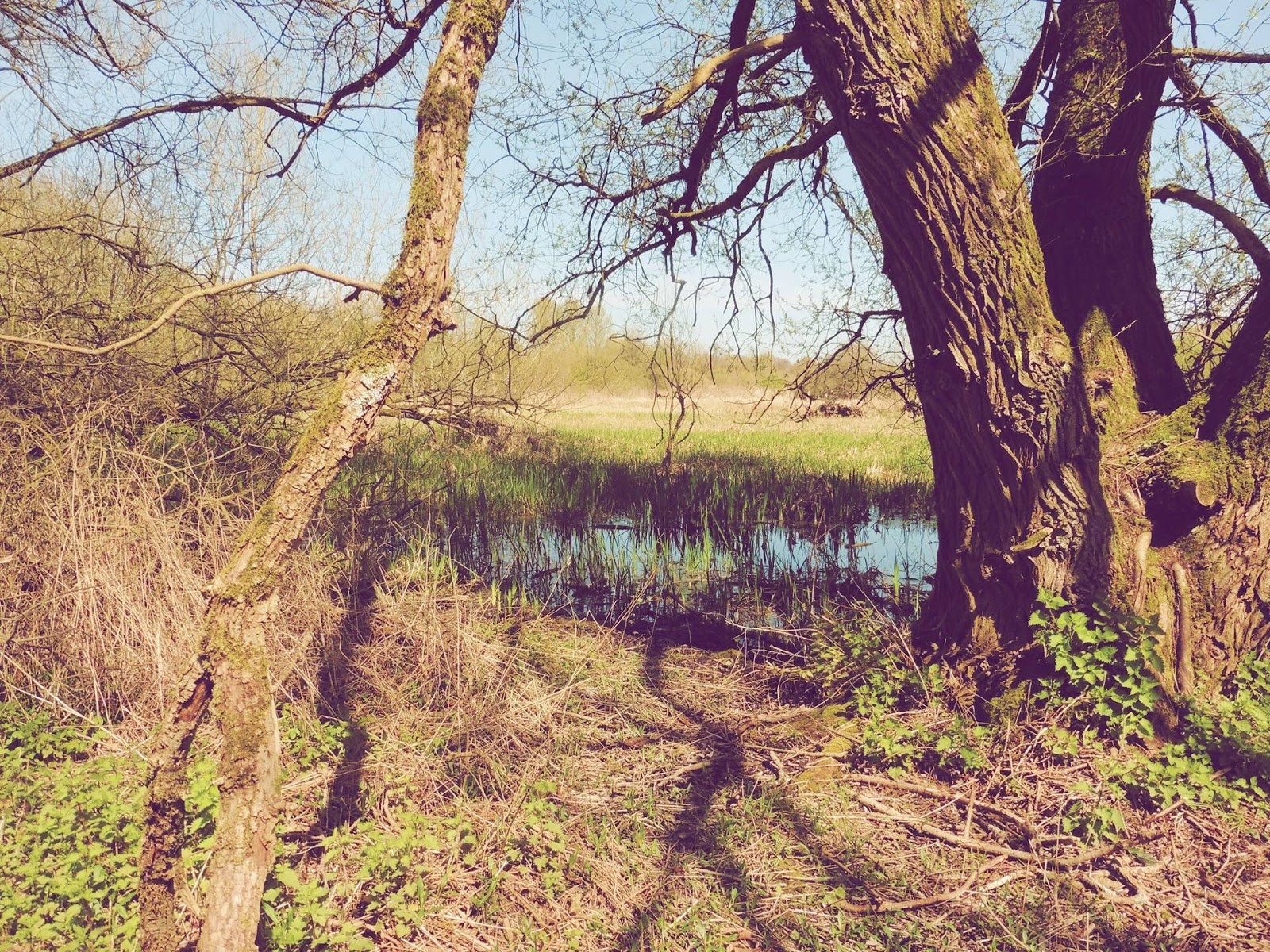 lebellelavie - A lunch time walk over Winnall Moors