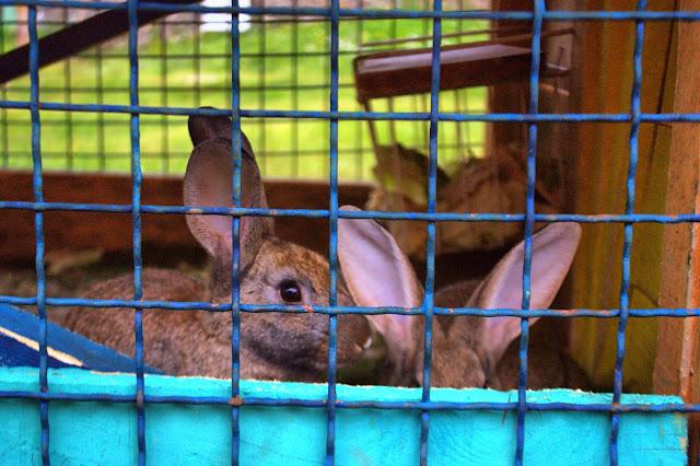Кролики в Этно деревне в Черногории