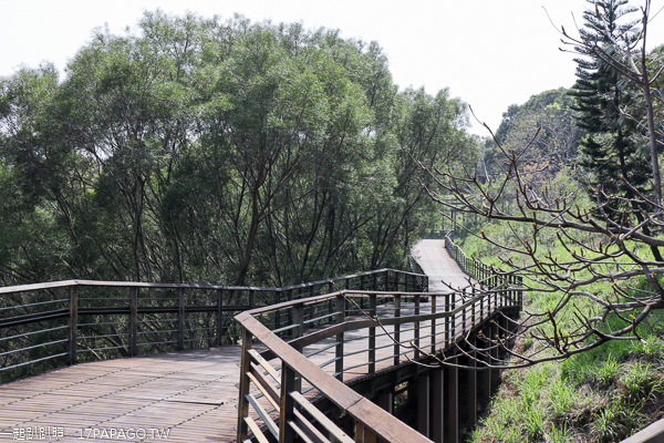 台中西屯|中科東大公園|400公尺九重葛花牆|諾亞方舟步道|空中木棧道|滯洪池|散步賞花拍美照