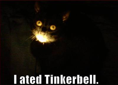 FUNNY CATS, FUNNY KITTEN, LOL CATS, FUNNY KITTY, PICTURES, PICS,  MOTIVATIONAL POSTERS, CAPTIONS: I ATE TINKERBELL - FUNNY CATS PICTURE