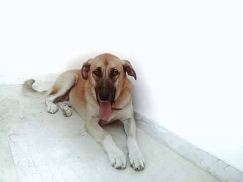 Ηγουμενίτσα: Χάθηκε σκύλος - βοηθήστε να επιστρέψει στην οικογέννειά του