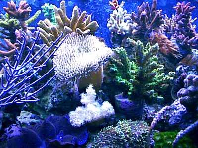 Pulau Raja Ampat : Keindahan Alam Bawah Laut, Terumbu Karang dan Keistimewaan-nya