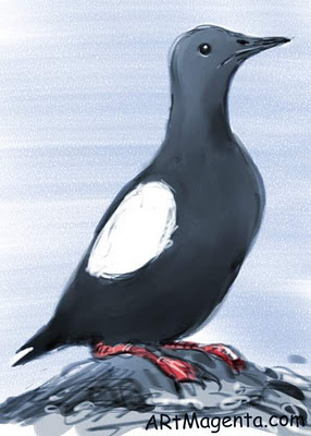 Black Guillemot sketch painting. Bird art drawing by illustrator Artmagenta