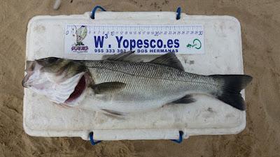 Róbalo-playa-De-La-Bota-pesca.