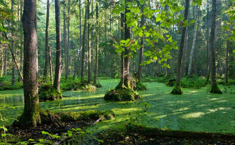 3. Bialowieza Forest, Poland and Belarus - 5 Fairytale Forests Straight Out of a Story Book