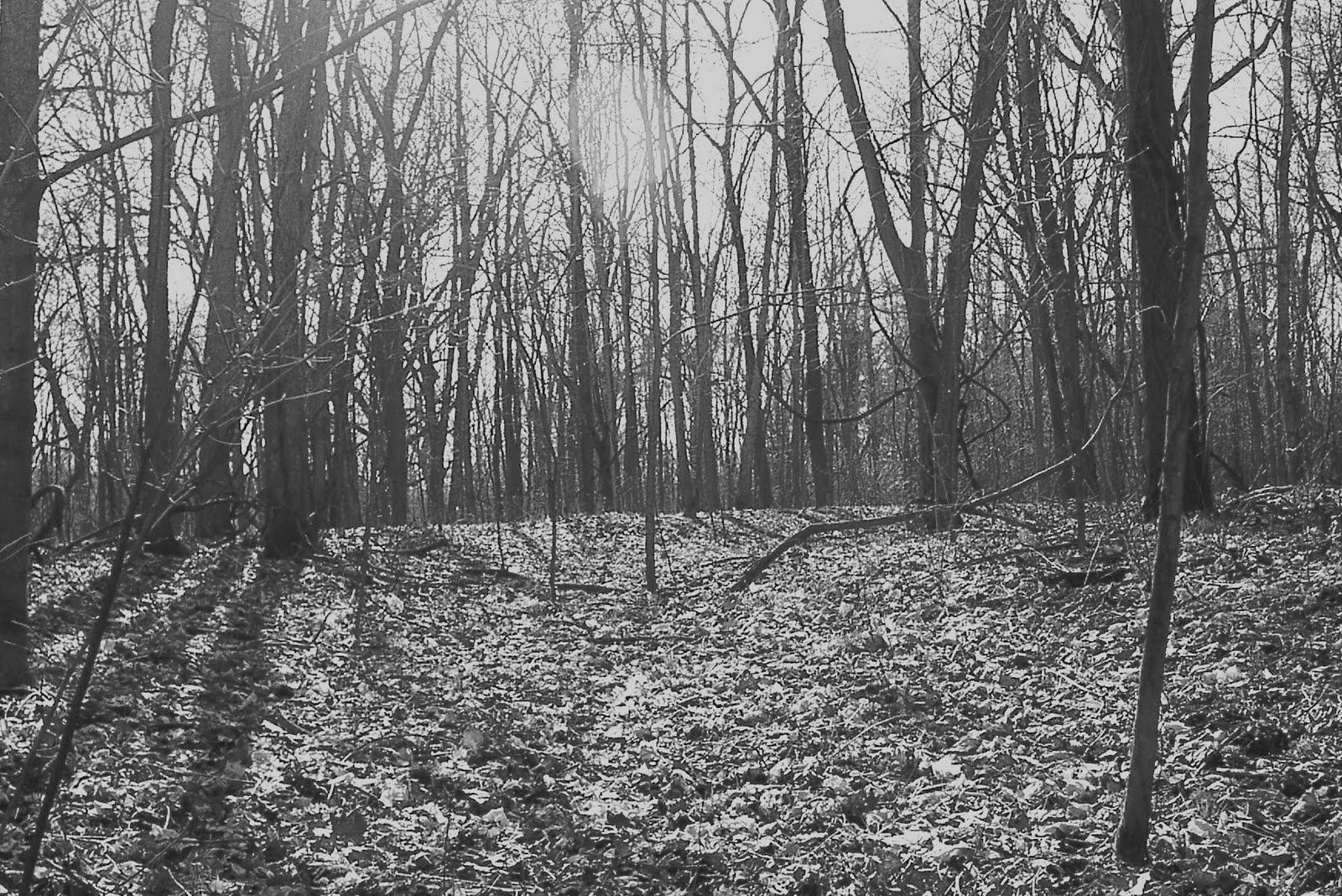 Indiana henry county shirley -  Randolph County For Their Earthwork Measuring 1080 A Circle 800 Feet In Diameter And The Large Circle That Was 1720 Feet In Diameter Or 215 X 8 1720