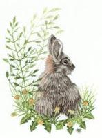 Tanja Berlin's Original 'Wild Rabbit'