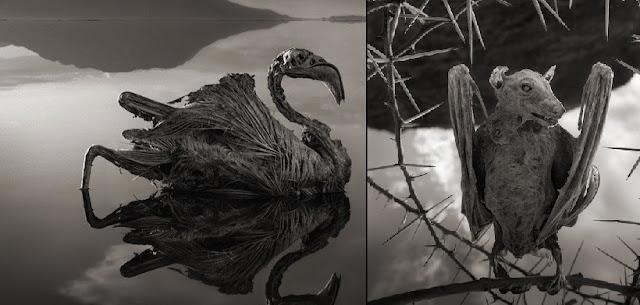 lakuriq nate dhe lejlek të mumifikuar në liqenin Natron të tanzanisë