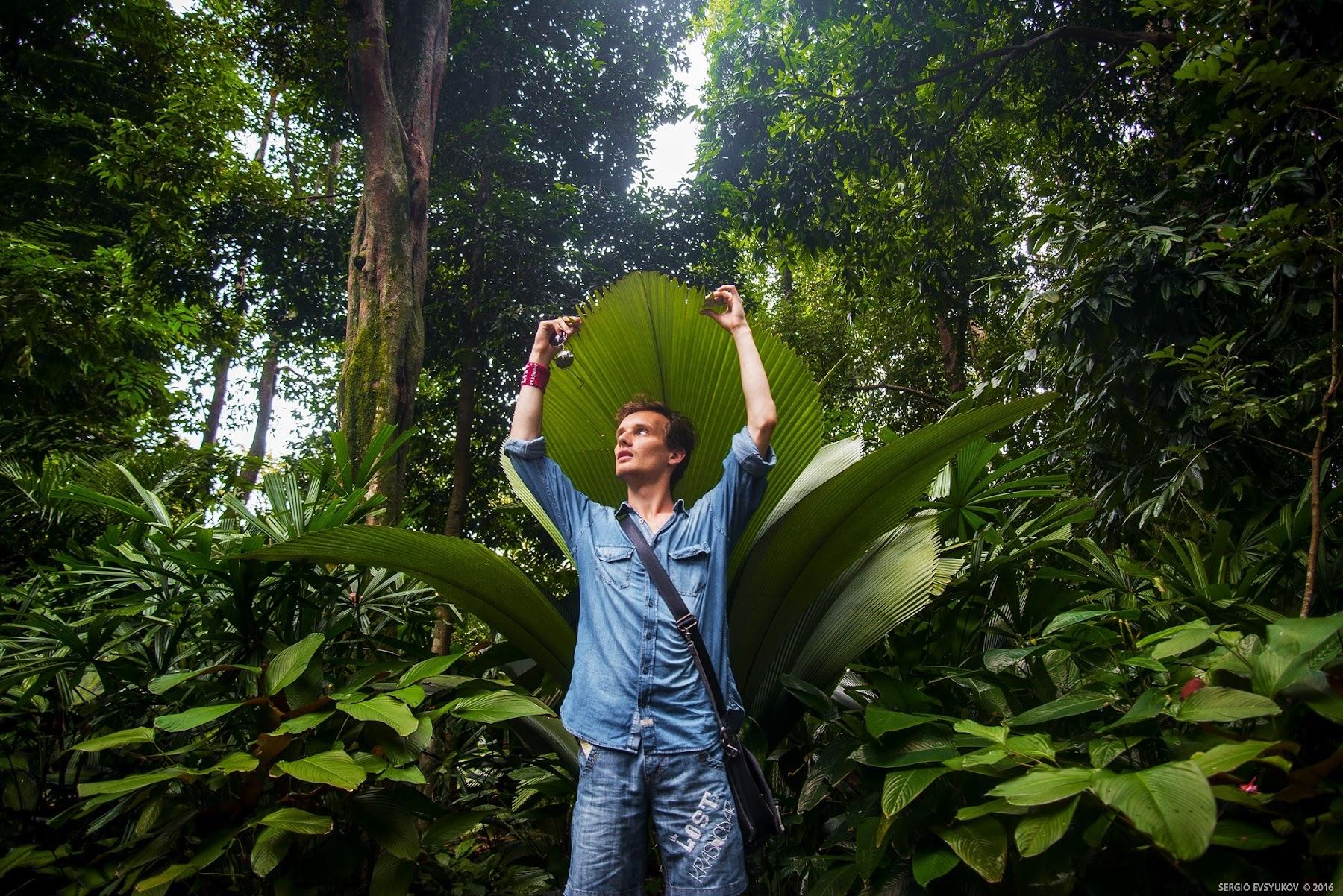 В Сингапурском ботаническом саду