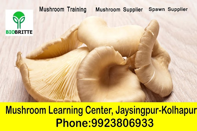 Mushroom Training Centre in maharashtra, pune,mumbai,kolhapur