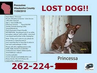 Lost Dog Princessa's Flyer