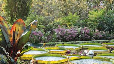 Plantas acuáticas. Curso en el Botánico de Madrid