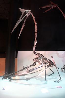 Quetzalcoatlus Giant Pterosaur Skeleton