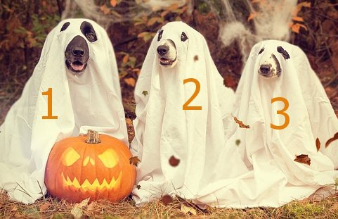 Halloween dogs in sheets 123 picture