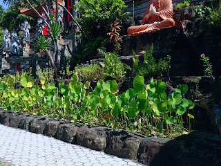 Lotus Flower Plant Pond in Front Of Buddhist Statue